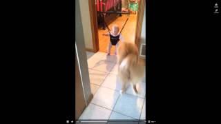 собака очень смешно учит ребенка прыгать(, 2014-11-12T19:49:41.000Z)