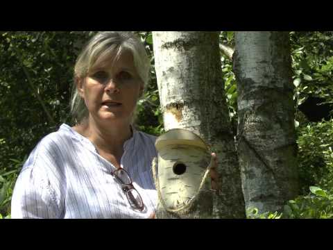 Choosing and siting Tit and Robin nest boxes
