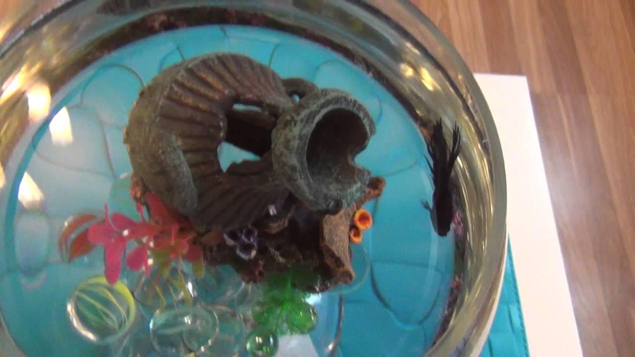 Мой аквариум.Рыбка петушок. Содержание.Уход.