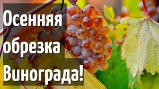 Осенняя обрезка винограда! - Простая понятная инструкция для всех!