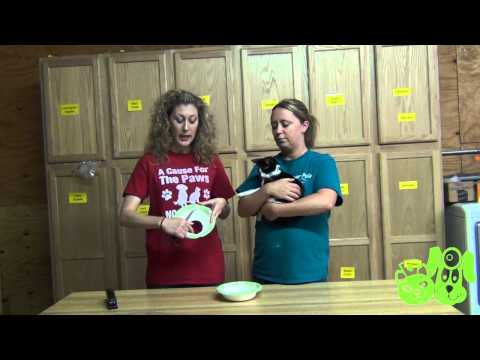 Homemade E-Collar for Cats - P.E.T.S. Clinic - Wichita Falls, Texas