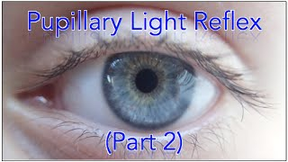 Pupillary light reflex - MADE EASY  Part 2 (Plus Sample Questions)