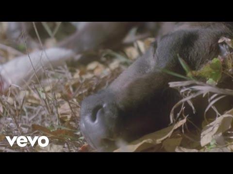Kan Wakan - Midnight Moon (Official Video)