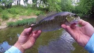 Creek Fishing in Music City!!