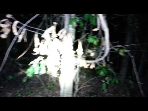 Active Sasquatch Area Night Investigation No Light Experiment We Saw Something And Growl @14:00 #81
