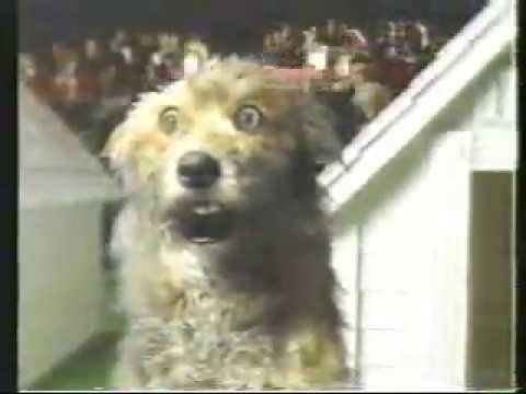 Bud light commercial dog show larry youtube bud light commercial dog show larry aloadofball Choice Image