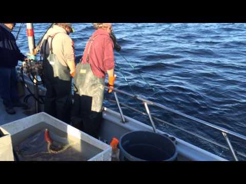 Emeryville Sport Fishing Sea Wolf  Crab Limits
