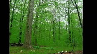 Зміна пір року у лісі за 3 хвилини - Зйомка природи у лісі