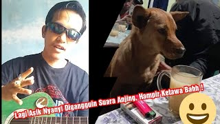 Pengacara Muda Asik Nyanyi Lagu Sedih Malah Digangguin Suara Anjing! Hampir ketawa bahh