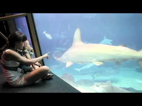 Maui Ocean Center - Hawaiian Aquarium