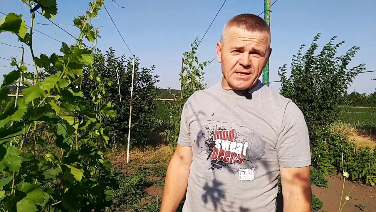 Защита вегетирующих саженцев.Виноград,инжир.