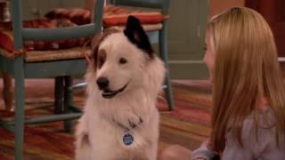 Собака точка ком - Сезон 1 Серии 10,11,12 - смотри все серии подряд | Сериал Disney
