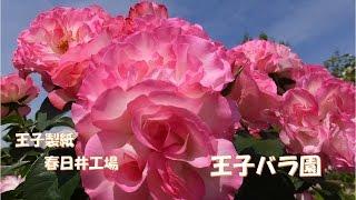 王子バラ園は、王子製紙 春日井工場の敷地内に作られたとても美しいバラ...
