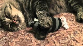 Кот, мышь и сон