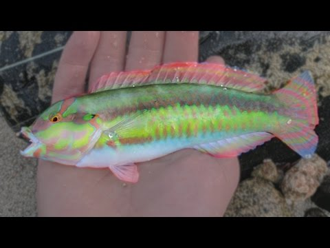 Fishing & Snorkeling in Paradise - Aruba Pt. 2
