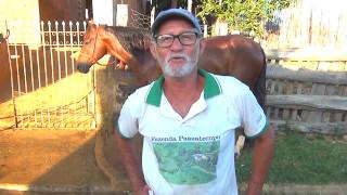 A história do Cavalo mais famoso do Youtube  _ Conheça o Antônio dos Bois no interior d e Minas