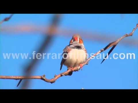 100 Sydney Birds