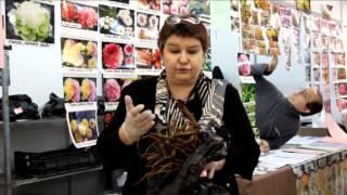 видео Посадочный материал. Многолетние и почвопокровные растения. Лилия
