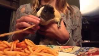 Морская свинка кушает спагетти(Морская свинка кушает спагетти Ссылка на это видео: https://youtu.be/I2Mr4UINmQE Ссылка на канал: http://www.youtube.com/channel/UCVlDMhCi1EC..., 2016-01-06T19:18:08.000Z)