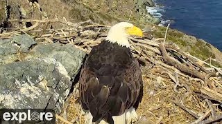 Bald Eagle Protects Eggs from Raven Attack!