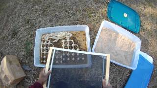 gg how to   maintaining a mealworm colony