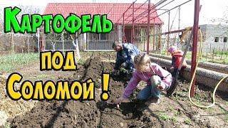 Посадка Картофеля / Выращивание картофеля под соломой !!!