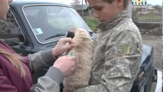Идет вакцинация домашних животных против бешенства