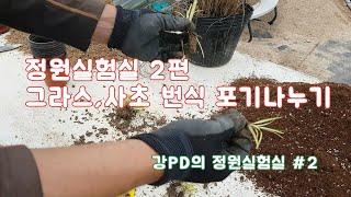 그라스 한포트로 열포트만들기~ /정원/조경/