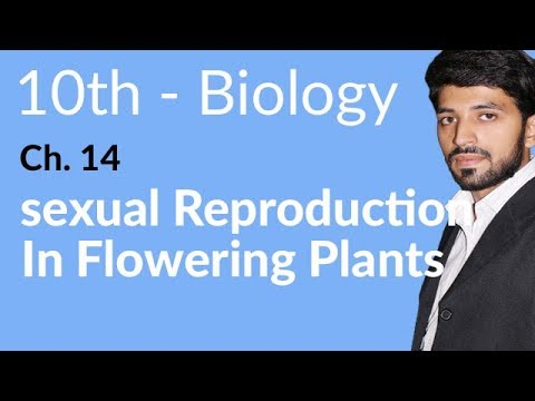 Sexual Reproduction in Flowering Plant - Biology Chapter 14 Reproduction - 10th Class