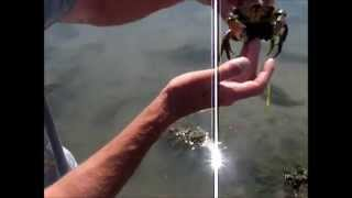 Comment trouver des crabes mous ou francs pour la peche ?