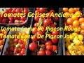 Variétés Tomates Cerises Anciennes: Tomate Cerise Coeur De Pigeon Rouge & Jaune