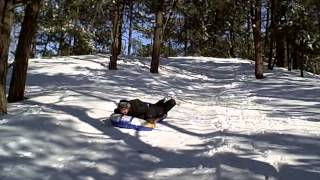 Sledding At Ponderosa De Buell Sled Fast Hill Snow Stunt