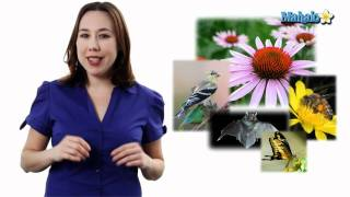 Learn Biology: Angiosperms & Pollinators