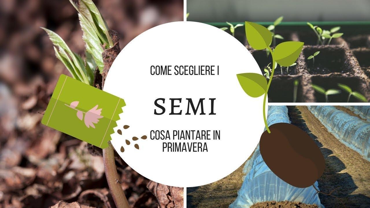 Cosa Piantare A Febbraio #1 come scegliere i semi da piantare | cosa piantare in primavera