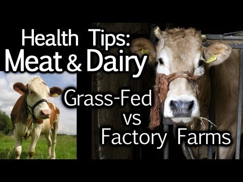 Meat & Dairy Health Tips: Grass Fed vs. Factory Farming, Animal Cruelty, Nutrition | The Truth Talks