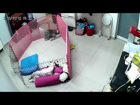 Dog Escapes Playpen