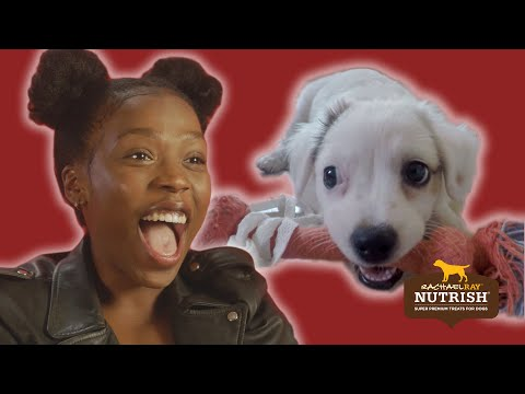 Thumbnail: People With Commitment Issues Foster Dogs For A Week // Presented By BuzzFeed & Rachael Ray Nutrish