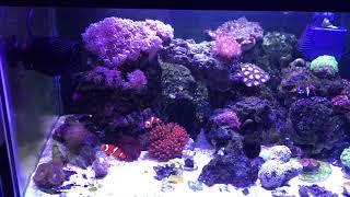 Морской Аквариум дома с водой из под крана.