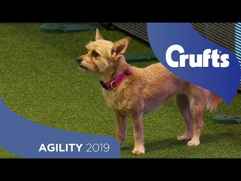Agility - Kennel Club Novice Cup Final - Small - Jumping | Crufts 2019