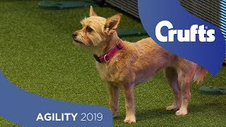 Agility - Kennel Club Novice Cup Final - Small - Jumping   Crufts 2019