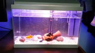 Akvaryum Japon Balığı ve Teleskop Balığı - 20 litre