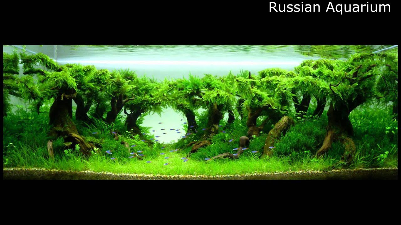 Best World Aquascape Underwater Landscapes