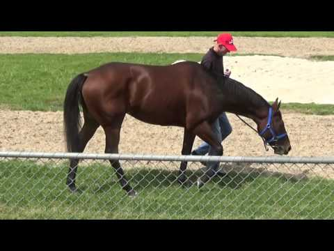 Australian Thoroughbred Bloodstock - Racehorse Shares & Syndications