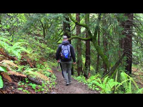Big Sur State Park, CA: Mill Creek Trail
