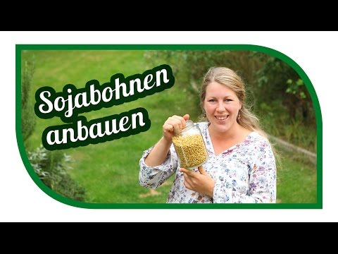 Sojabohnen anbauen | Ernte | 1000 Gärten Experiment | Exoten im Garten