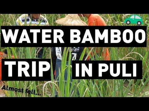 Water Bamboo Trip