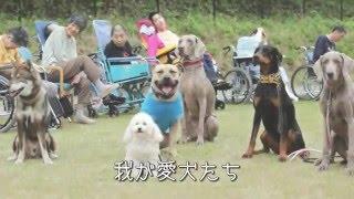 重度障がい者施設への慰問活動 参加犬 イブキ(ワイマラナー) カンナ(...