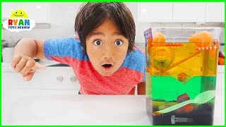 Sink Or Float Density Tower Science Experiments For Kids