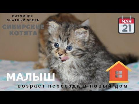 Вопрос: Во сколько месяцев можно свободно отпускать котенка?