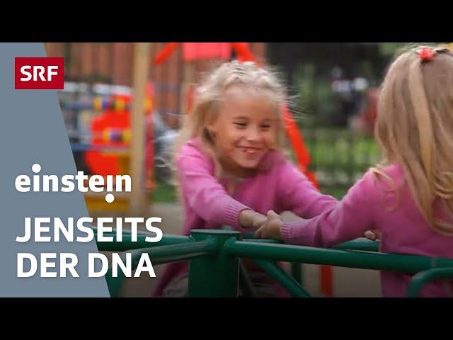 Epigenetik – sind wir Gene oder Umwelt?   SRF Einstein